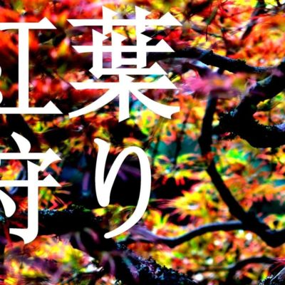 Momijigari (紅葉狩り) at the Japanese Gardens: October 12