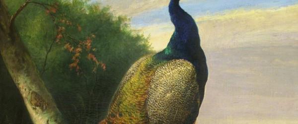 rsz_tn_frye_socialmedium_peacock