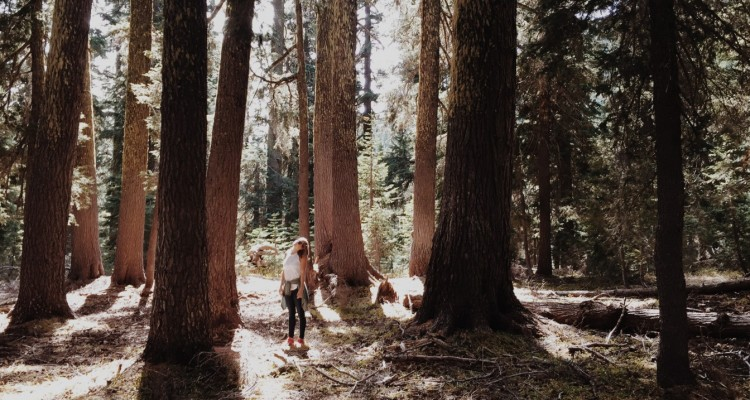 Standing within the trees at Crater Lake National Park. Image courtesy of Rachael Reiner.