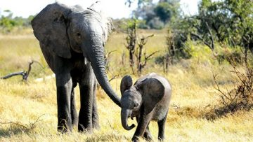 Kiti and Naledi on an adorable stroll