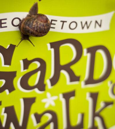 21st Annual Georgetown Garden Walk, July 10