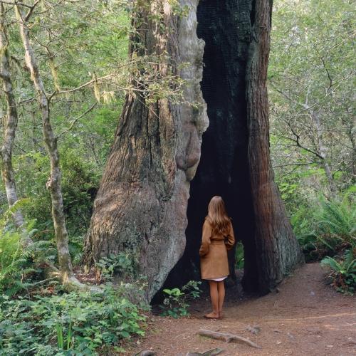 Woman with Hollowed Tree by Karin Bubaš