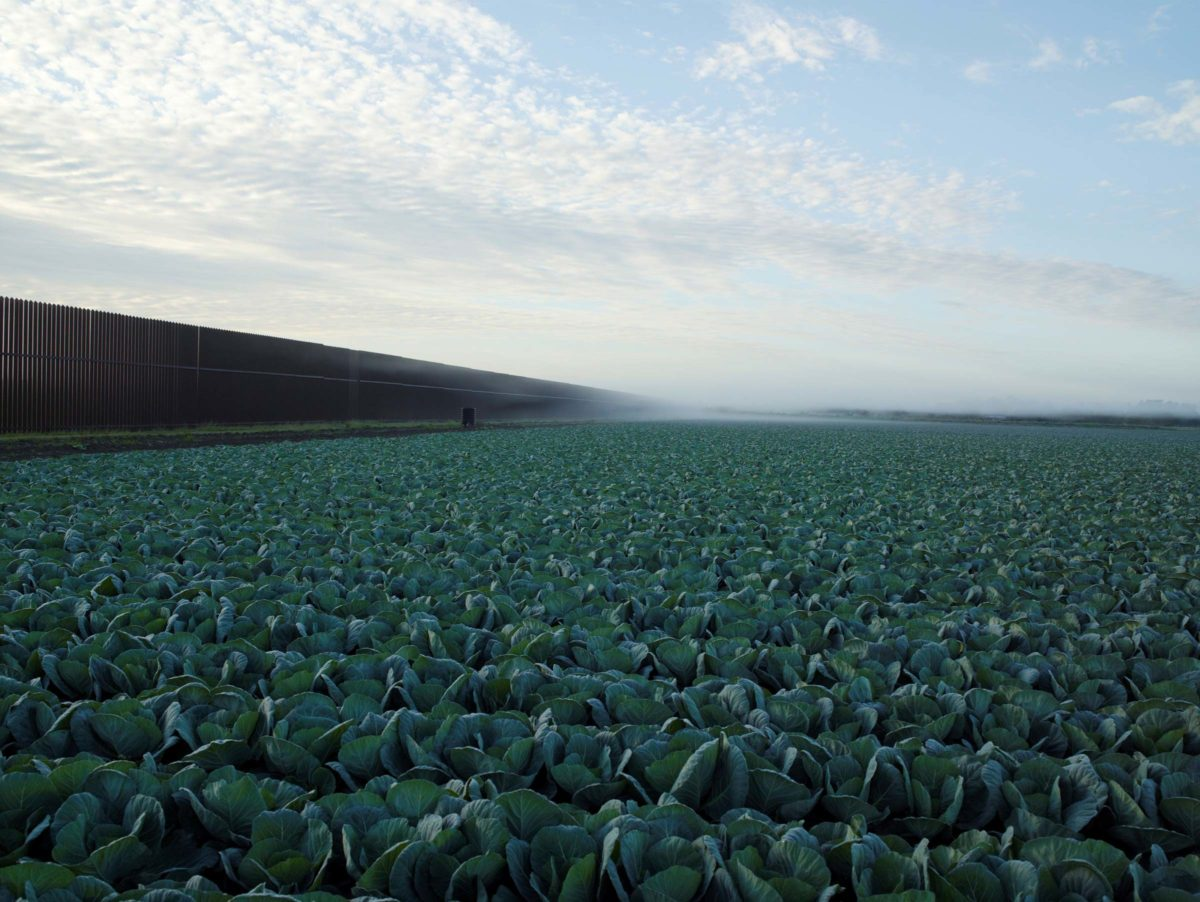 Cabbage crop and wall by Richard Misrach