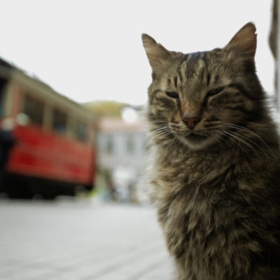 Cats Rule Istanbul in the New Documentary <em>Kedi</em>